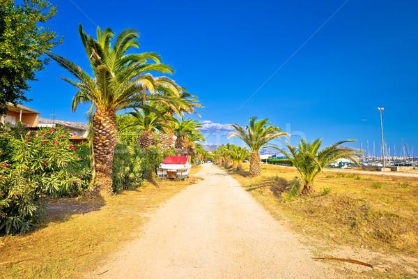 Palma mar región Croacia playa carretera Foto stock © xbrchx