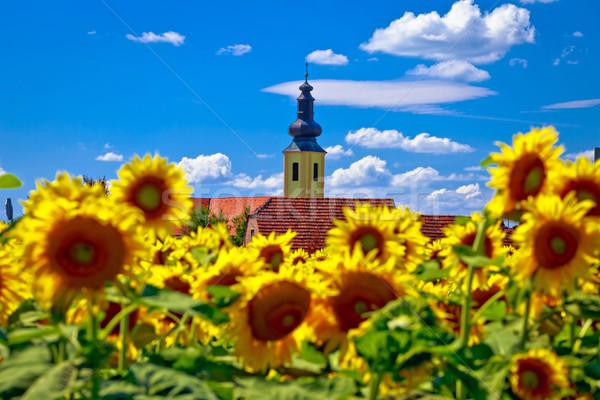 регион пейзаж подсолнечника области мнение идиллический Сток-фото © xbrchx