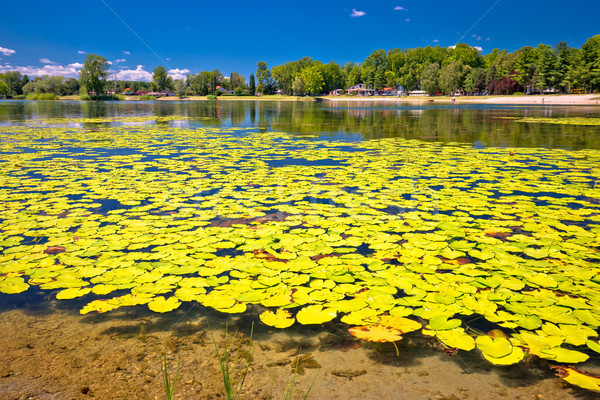 Soderica lake green landscape and water lilys view Stock photo © xbrchx
