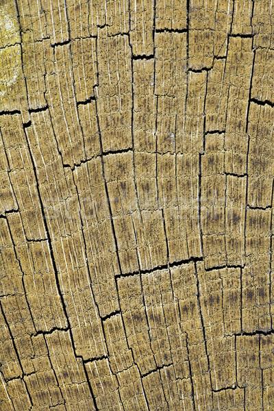 Cracked timber surface Stock photo © Ximinez