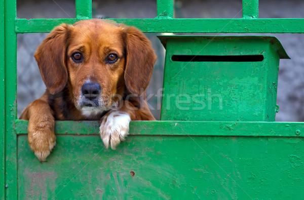 Achter poort triest hond metaal Stockfoto © Ximinez
