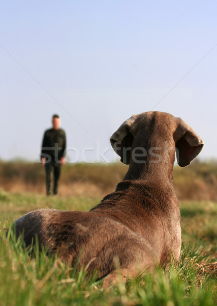Chien herbe attention homme Retour Photo stock © Ximinez