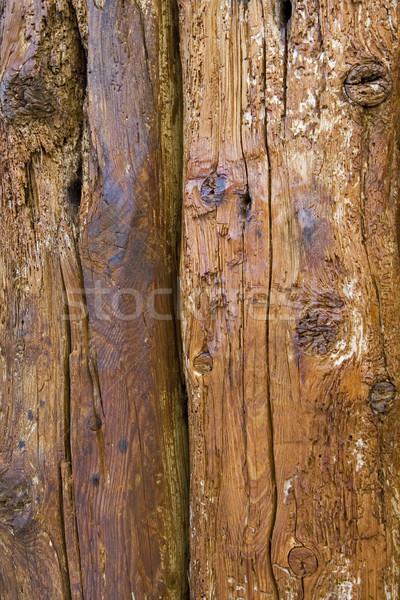 Alten Risse Insekt Textur Hintergrund orange Stock foto © Ximinez