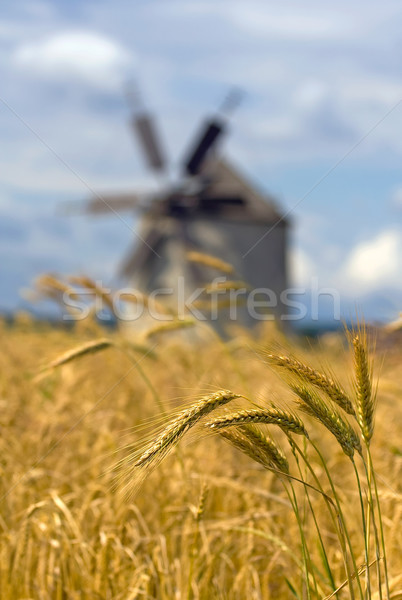 Bunch of ears of wheat with a windmill in the background Stock photo © Ximinez