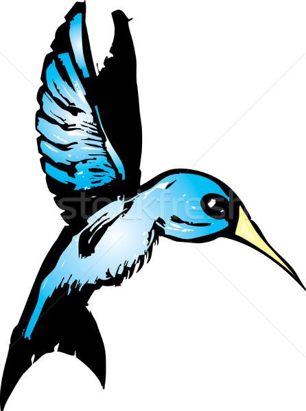 Azul beija-flor vôo asas vetor animais selvagens Foto stock © xochicalco