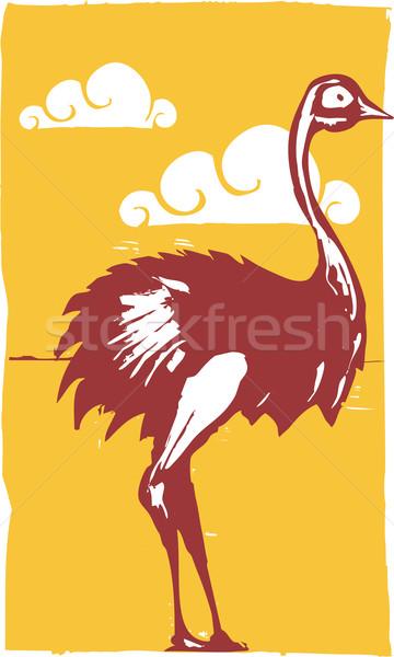 Struzzo african uccello gambe africa collo Foto d'archivio © xochicalco