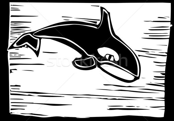 Gyilkos bálna klasszikus stílus kép víz Stock fotó © xochicalco