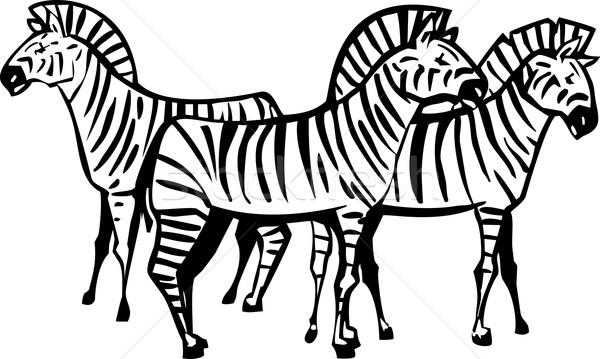 3  シマウマ アフリカ パターン 動物 シマウマ ストックフォト © xochicalco