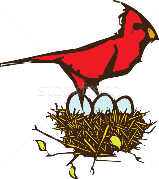 Cardinal Nest Stock photo © xochicalco