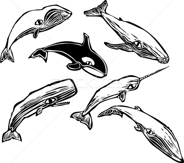 Whale Group  Stock photo © xochicalco