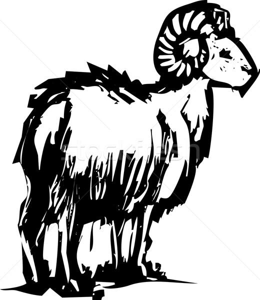 Bighorn Sheep Stock photo © xochicalco