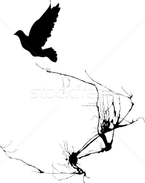 Dove lotu cień drzewo Zdjęcia stock © xochicalco