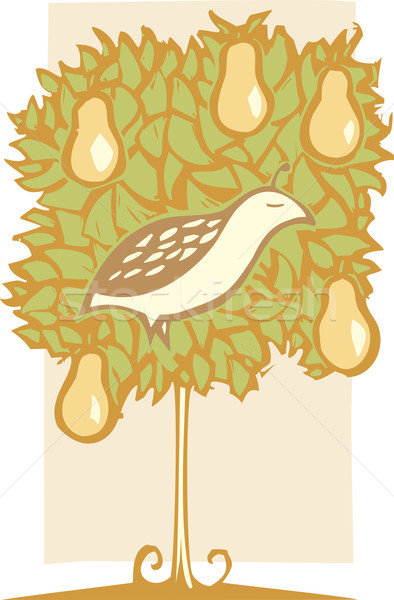 Partridge and Pear Tree Stock photo © xochicalco