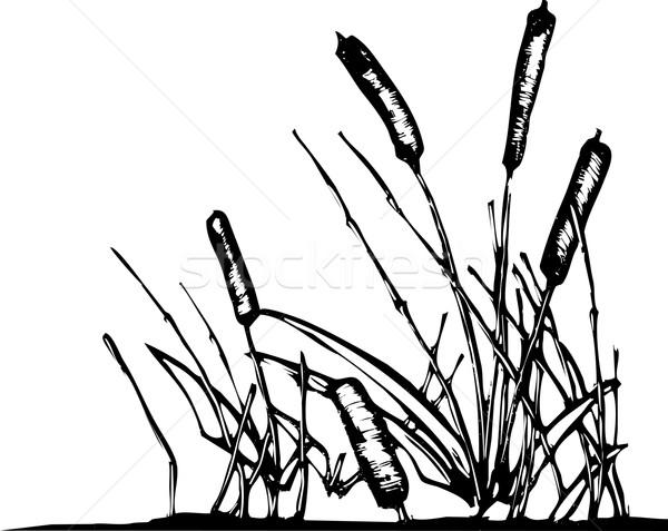 пруд расти воды закат Сток-фото © xochicalco