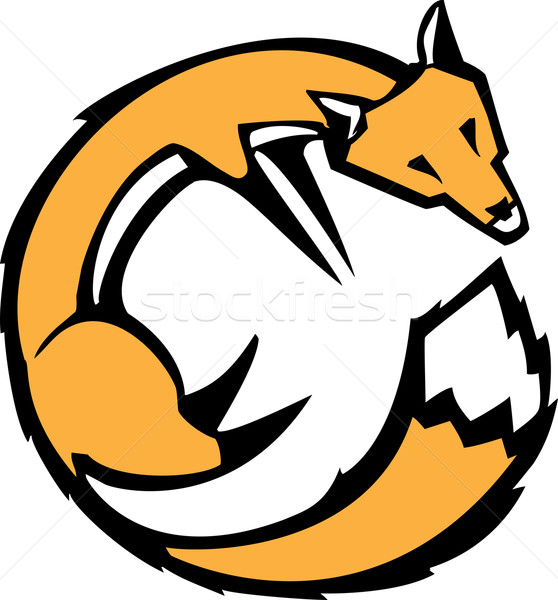 Curled Fox Stock photo © xochicalco