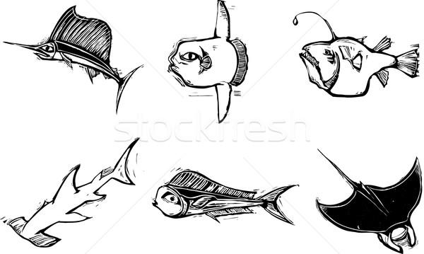 Bw Fish Group Stock photo © xochicalco