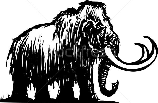 Mammoth Stock photo © xochicalco