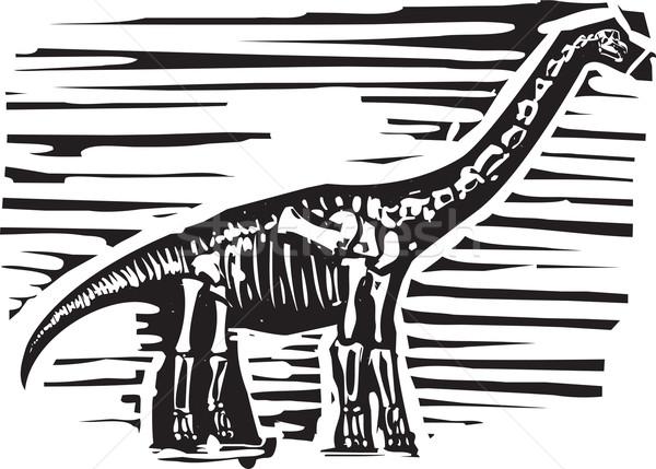 Fóssil estilo imagem longo educação história Foto stock © xochicalco