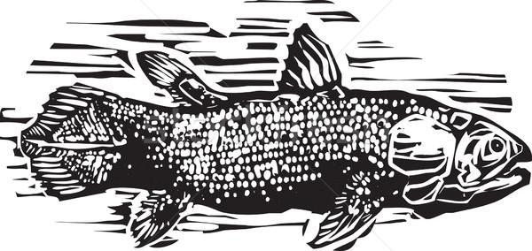 スタイル 画像 生活 化石 魚 海 ストックフォト © xochicalco