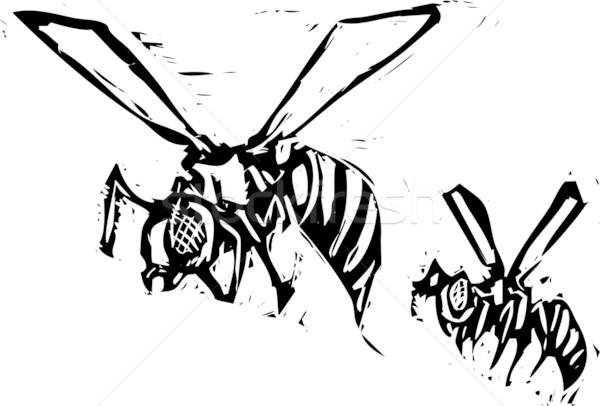 Kettő képek méh szárnyak horror rovar Stock fotó © xochicalco
