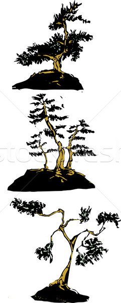 Japanese bonsai trees Stock photo © xochicalco