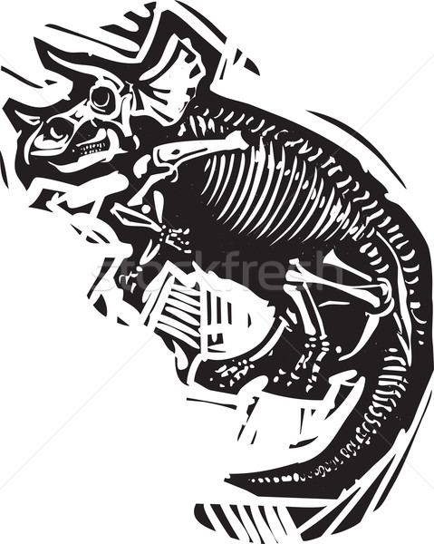 Triceratops Fossil Stock photo © xochicalco