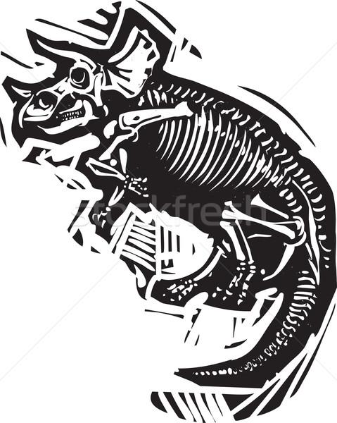 Fóssil estilo imagem dinossauro esqueleto natureza Foto stock © xochicalco