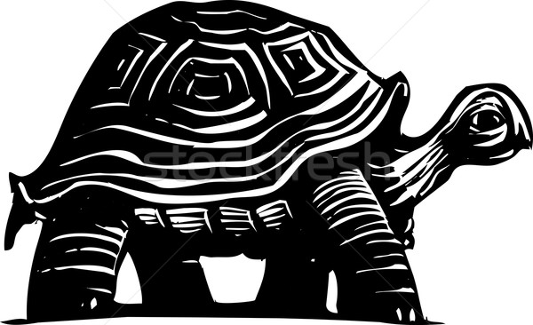 Schildpad stijl schildpad natuur lopen veiligheid Stockfoto © xochicalco