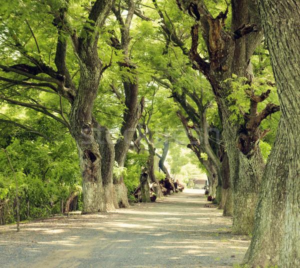 замечательный пейзаж дельта дерево Вьетнам Сток-фото © xuanhuongho