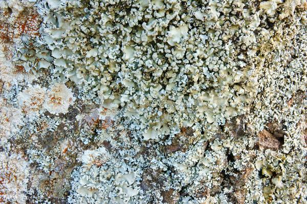 Padrão cogumelo casca branco fungo surpreendente Foto stock © xuanhuongho