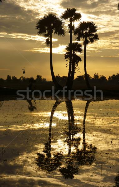 Stockfoto: Palmbomen · silhouet · water · mooie · landschap