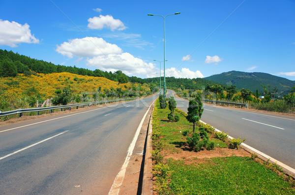 Rodovia pinho floresta beleza estrada atravessar Foto stock © xuanhuongho