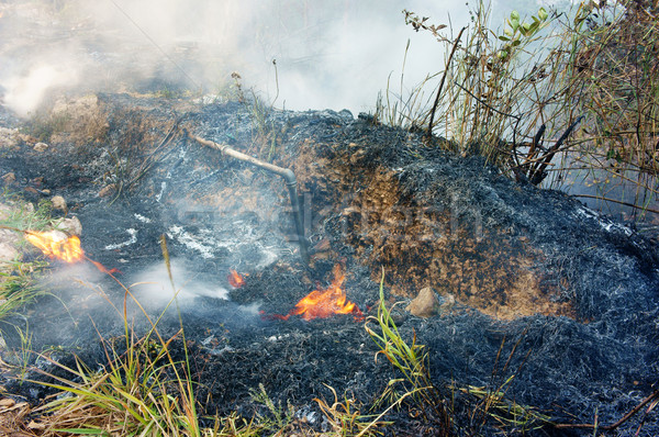burn dry grass, forest fire Stock photo © xuanhuongho