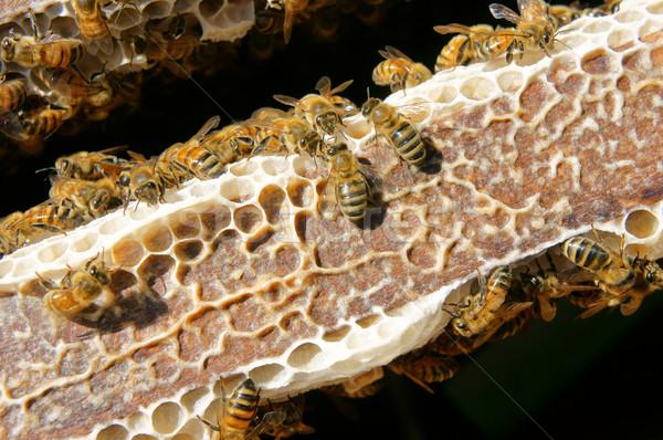 Vietnã abelha mel agricultura grupo Foto stock © xuanhuongho