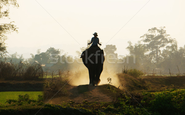 Silhouette of people ride elephant on path Stock photo © xuanhuongho