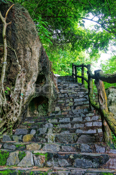 Zdjęcia stock: Zdumiewający · kamień · schody · ogrodzenia · drzewo · scena