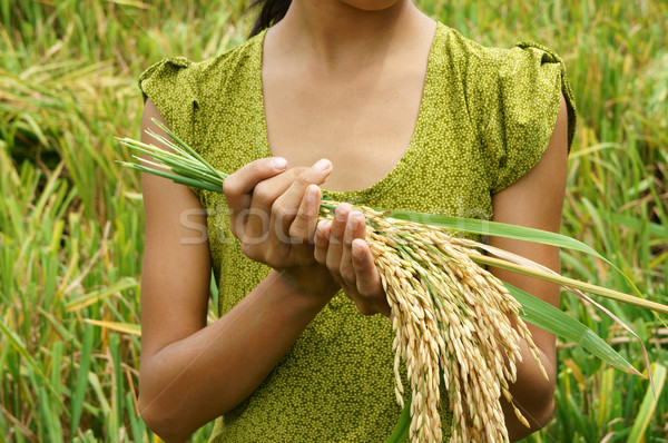 World food security, famine, Asia rice field Stock photo © xuanhuongho