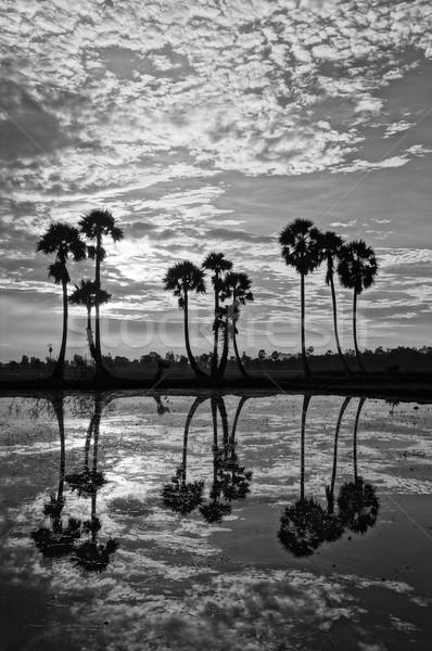 Stok fotoğraf: Palmiye · ağaçları · siluet · su · güzel · manzara