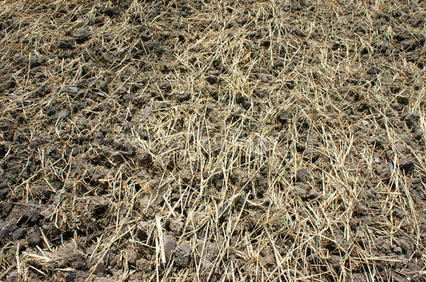 Paddy field, dry soil, drought land, hot weather Stock photo © xuanhuongho