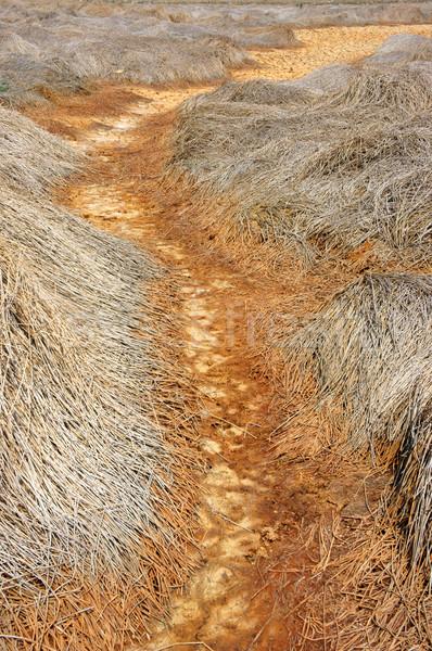 Sécheresse terres changement climatique chaud été foin Photo stock © xuanhuongho
