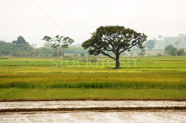 Viet Nam countryside Stock photo © xuanhuongho