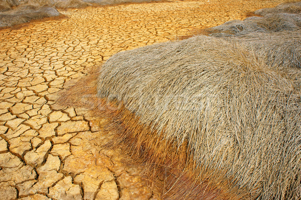 drought land, climate change, hot summer Stock photo © xuanhuongho