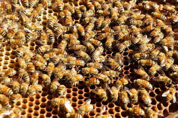 Vietnam Bienenstock Biene Honig Landwirtschaft Gruppe Stock foto © xuanhuongho