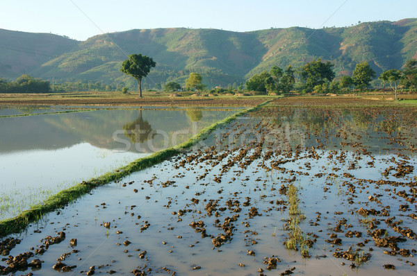 Agriculture field, tree, mountain, reflect Stock photo © xuanhuongho