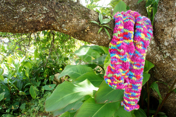 Colorful wollen scarf, handmade, gift Stock photo © xuanhuongho