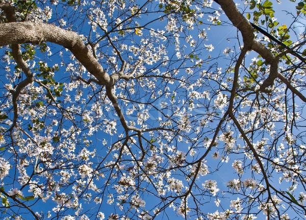 Zuiver witte bloem bos verbieden bloem Stockfoto © xuanhuongho
