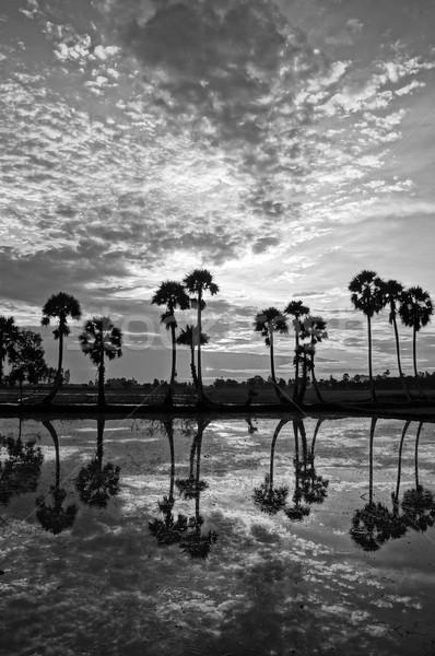 Foto stock: Palmeiras · silhueta · água · belo · paisagem