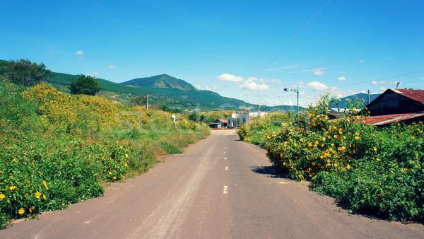 Platteland wild zonnebloem bloeien Geel straat Stockfoto © xuanhuongho