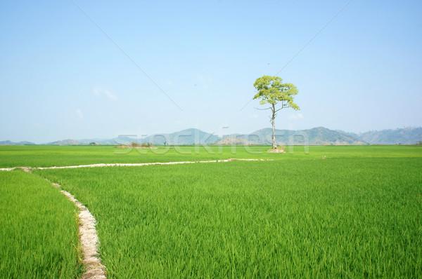 Photo stock: Arbre · Viêt-Nam · domaine · belle · agriculture · moi
