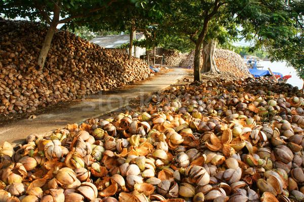 Paisagem coco viajar delta surpreendente Foto stock © xuanhuongho
